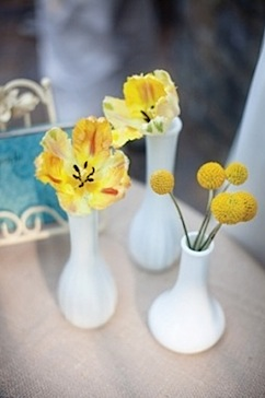 yellow in white vases.jpeg